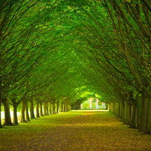 Business IT Consulting - Triella Service - Avenue through trees in a formal garden