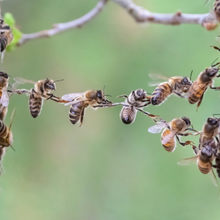 Managed IT service- triella service - Trust in teamwork of bees bridging two bee swarm parts